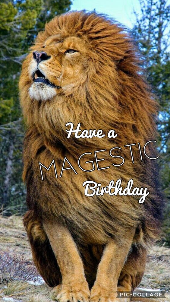 Have a Majestic Birthday. Huge lion