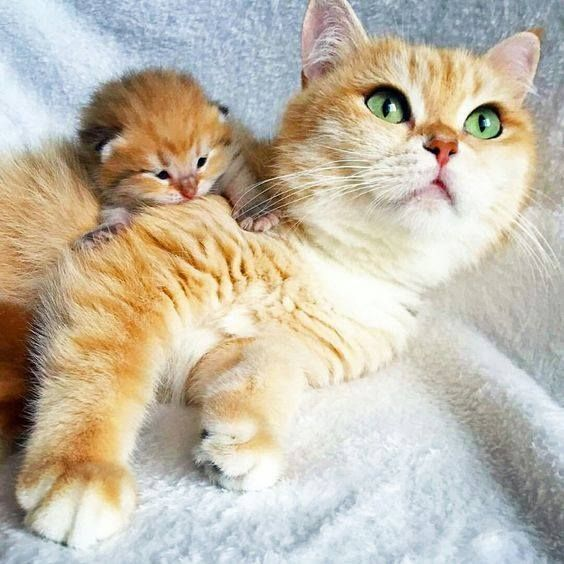 15 Pictures Of Mama Cats And Kittens For Mother S Day Cute Animals Cute Cats Mama Cat