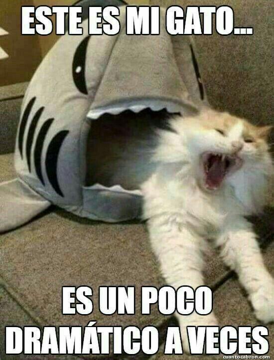 Pin By Djispi On Memes Y Otros Graciosos Funny Animal Memes Funny Spanish Memes Funny Memes