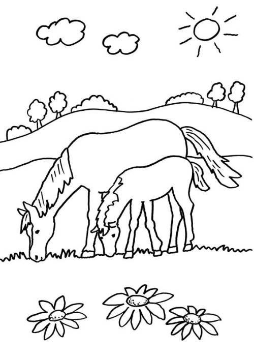 pferde fohlen ausmalbilder  malvorlagen