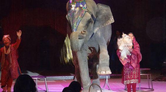 Valencia, El ayuntamiento prohíbe los circos y las ferias que exhiban animales salvajes