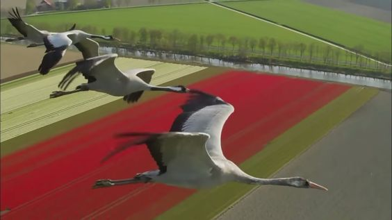 Naoki Sato - Synchro Bom-Ba-Ye / Departure 【HD】 Bird's Eye View of the World.