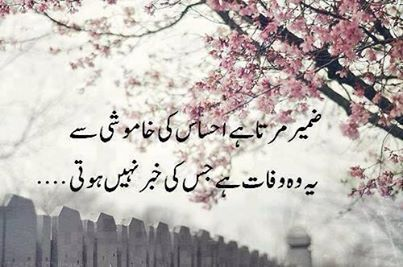 Best Urdu Quotes Forever - Karachi News