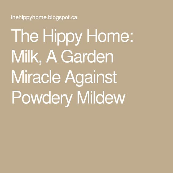 The Hippy Home: Milk, A Garden Miracle Against Powdery Mildew