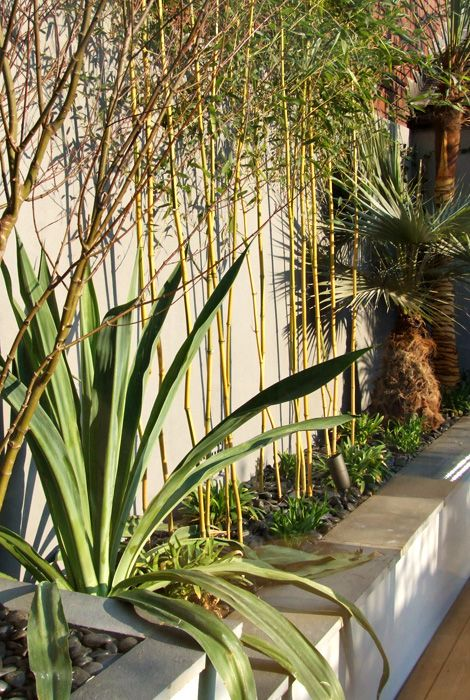Bamboo in a mixed tropical border in a modern Hampstead