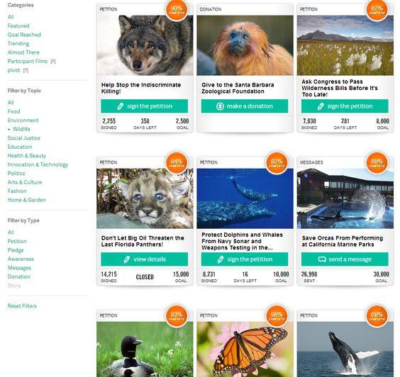 TakePart Wildlife Actions