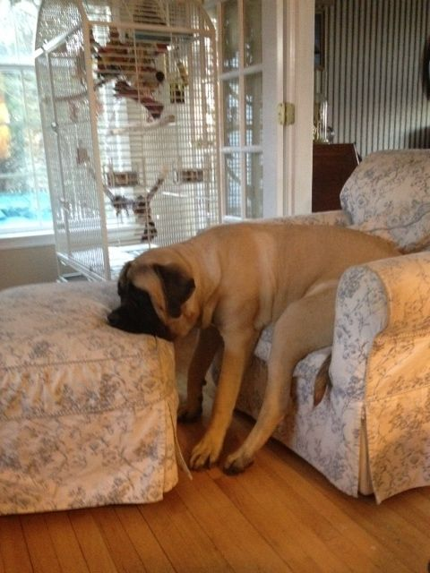 chien-dormir-reveil-10