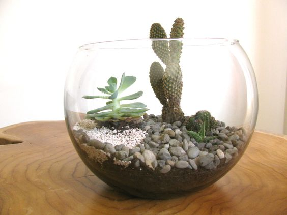 Terrario de cactus en pecera kali for Peceras de jardin