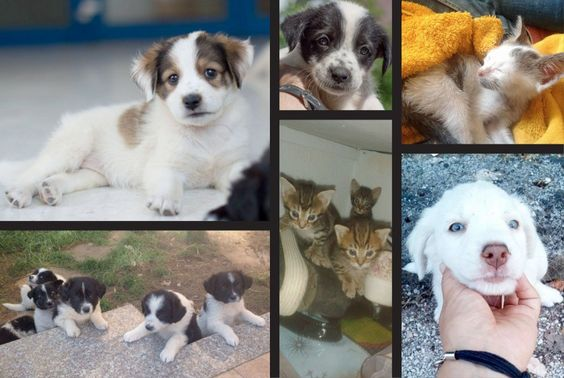 University of Ioannina Animal Welfare Group