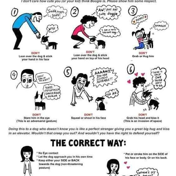 How to meet a dog.