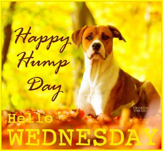 Happy Hump Day Hello Wednesday