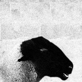 """'Black Sheep', 2014 by Christy Park - Photography Mixed Media. 13 x 19 x 1.5"""""""