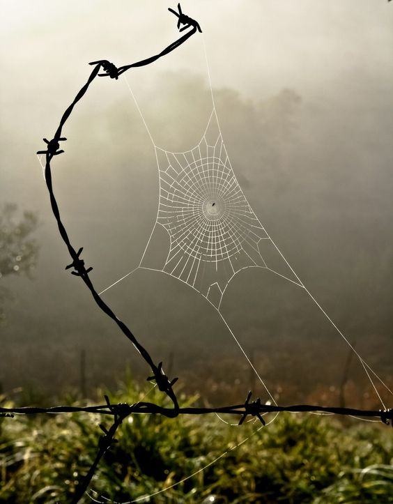 Fine art by Man (barbed wire in sculptural form), Spider (for the gossamer beauty and antithesis of barbed wire in an eternal push pull of opposites), and Nature (for the gorgeous backdrop):