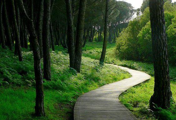 Senderos de Matalascañas.  (Playa de Huelva). Precioso paisaje por su verdor, tranquilidad y entorno.