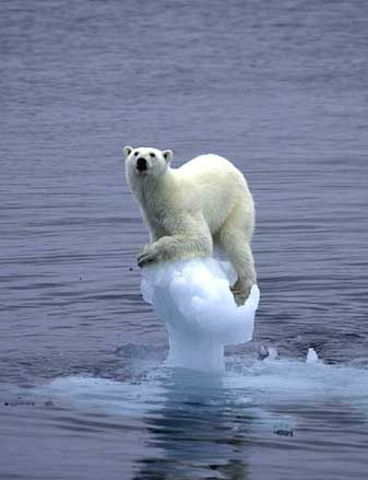 Polar bears detected swimming in high seas miles from shore ...