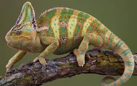 reptiles - Resultados de Yahoo España en la búsqueda de imágenes