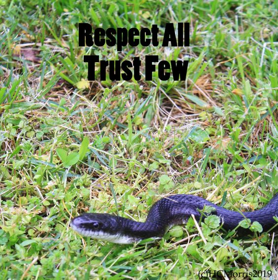 image of a black snake with respect all words