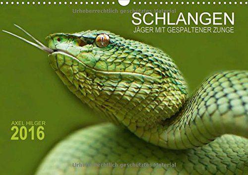 SCHLANGEN. JÄGER MIT GESPALTENER ZUNGE (Wandkalender 2016 DIN A3 quer): Für das Projekt Schlangen reiste der Fotograf Axel Hilger auf langen ... (Monatskalender, 14 Seiten) (CALVENDO Tiere) von Axel Hilger http://www.amazon.de/dp/3664593898/ref=cm_sw_r_pi_dp_8L6Dwb0ES7KHC