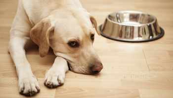 The Diamond Pet Foods recall now seems to involve more than one of their plants, and there are more reports of illness.