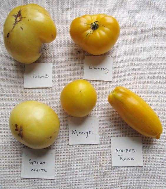 Yellow Heirloom Tomato Varieties