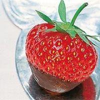 Erdbeeren mit Schokoladenüberzug