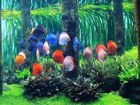 A Must Watch The Discus Megatank A New Video Of The Monster Tank Thanks Aquarium Architecture Y Aquarium Architecture Monster Tanks Tropical Fish Aquarium