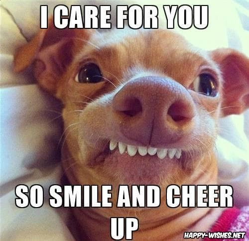 23 Funny Memes To Cheer Up Someone Best Cheer Up Memes Funny Images To Cheer You Up Cheer Up Emmy And Baby Sloth L Cute Puppy Meme Dog Jokes Funny Mom Memes