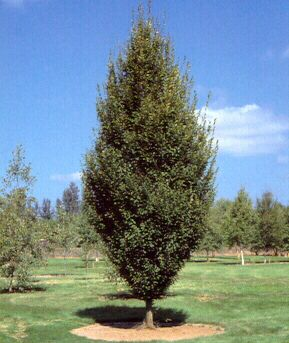 Think, that mature tree nursery ontario sorry, that