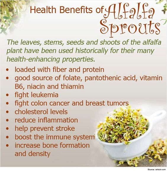 Health benefits of #alfalfa #sprouts #healthysprouts