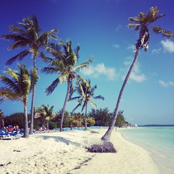 Palm trees and sunshine in CocoCay.: