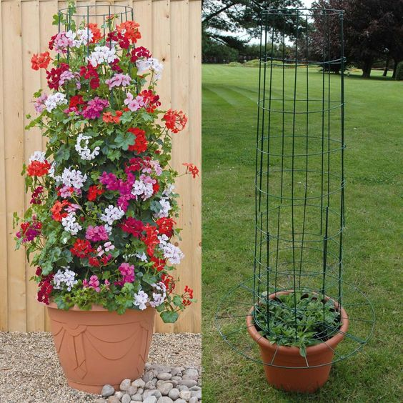 Idea for sweet peas in wine barrel planter