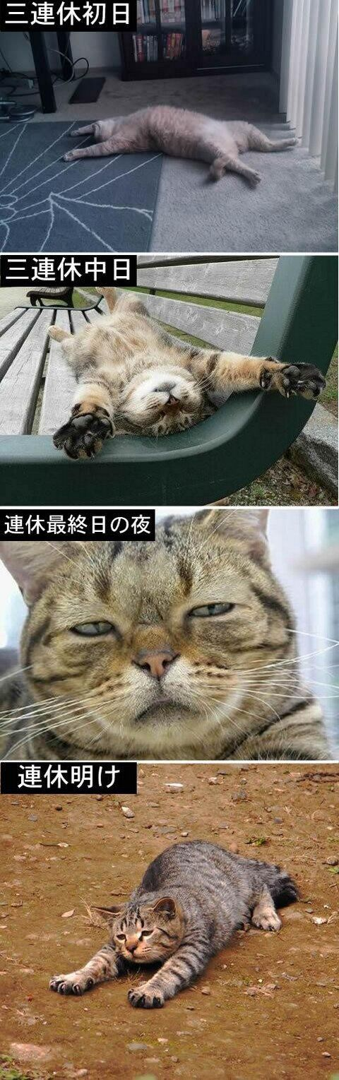 **How to spend holidays represented by cat.** The first day of the holidays. The middle day of holidays. Last night of the holiday. Holidays is OVER.... この三連休の過ごし方をネコで表現した画像が的確すぎると話題に : ハムスター速報: