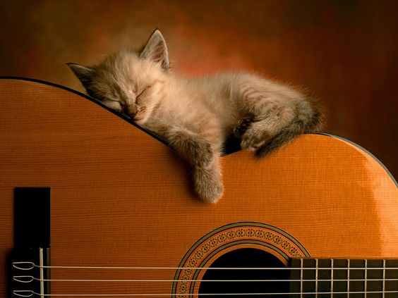 There's something me and this kitty have in common :D we both love guitars :D