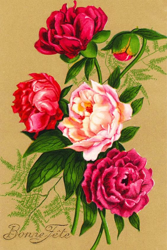 Canvas Prints Vintage Seed Packet Peony Paeony Flower Print Multi Color Picture #CanvasDen #Vintage
