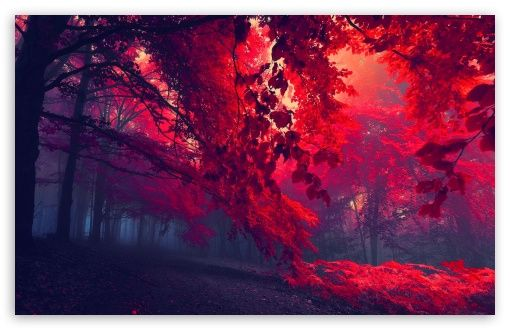 Red Forest Hd Wallpaper For 4k Uhd Widescreen Desktop Smartphone Forest Wallpaper Tree Hd Wallpaper Fall Wallpaper