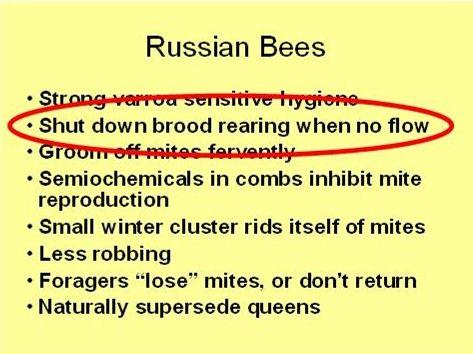 Choosing your Troops: Breeding Mite-Fighting Bees @ Scientific Beekeeping