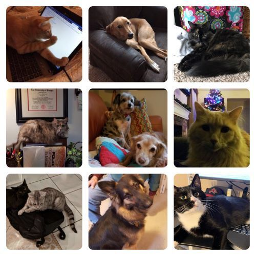 Happy Holidays From The Pets Of Eb Medicine Family Lovepets Pets Animals Happy Holidays