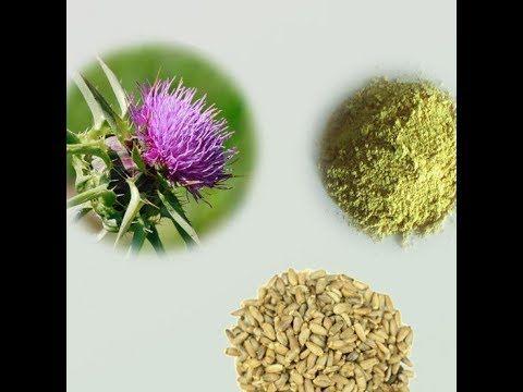 الخرفيش أو شوكة الجمل فوائده الطبية ومحاذير وأضرار استخدامه الطب البديل الخرفيش شوكة الجمل Youtube How To Dry Basil Herbs Flowers
