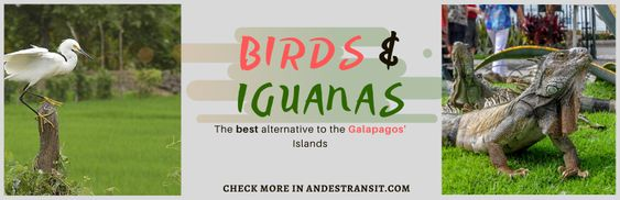 Discover Guayaquil: Birds And Iguanas (Pinterest)