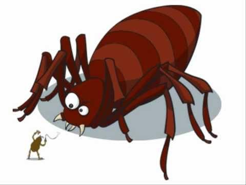 Las corraleras de lebrija - del pellejo de una pulga.wmv
