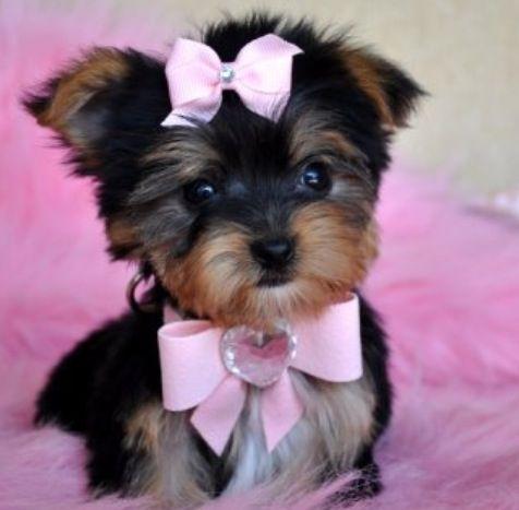 So adorable!!!❤