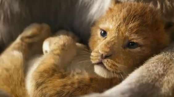 A still from the Lion King trailer (Disney)