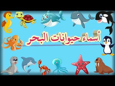 Sea Animals Names For Kids In Arabic أسماء الحيوانات البحرية باللغة العربية Youtube Sea Animals Animals Make It Yourself
