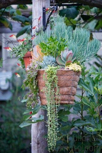 Container Gardening Magazine 2012 Edition mediterranean