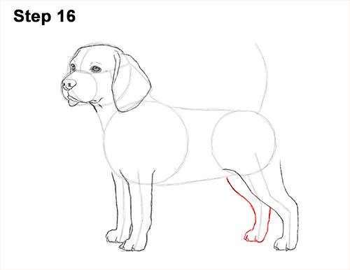 How To Draw A Beagle Video Step By Step Pictures Dog Drawing