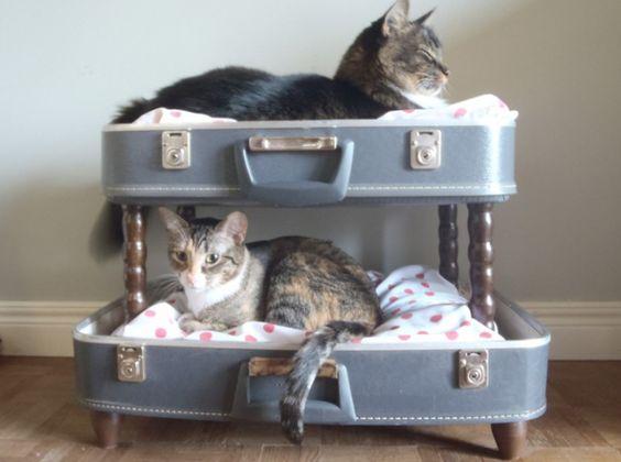 Les valises deviennent lits superposés pour vos chats !