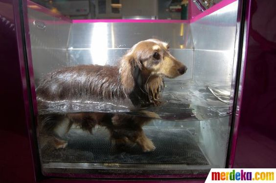 Seekor anjing berendam di dalam microbubble yang merupakan tempat mandi untuk hewan peliharaan, yang harganya Rp 188 juta saat di acara Taipei Pet Show 2012 di Taipei.