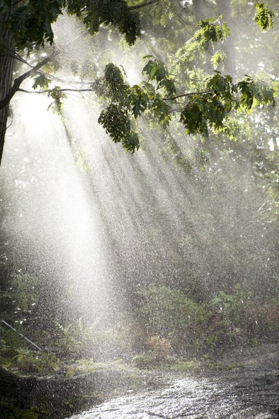 Play Misty Photo by Ivo M Vermeulen  Morning Eye Candy  Pinterest  Sole,  # Sunshower Love_194845