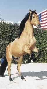 Mustang Spirit Real