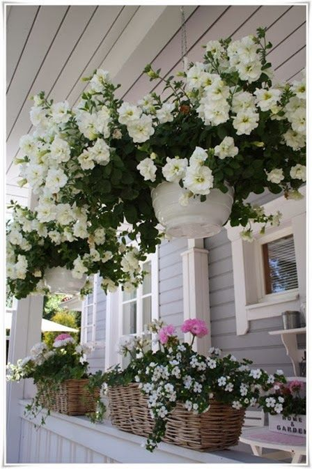 Well tended hanging baskets full of petunias. This extends the garden up onto the porch and compliments the house.: